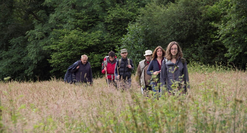 Group and private guided walks featured image